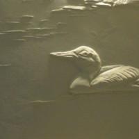 הברווזון המפואר | שירה שטרן